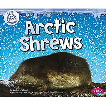 Arctic Shrews (Ice Age Animals)