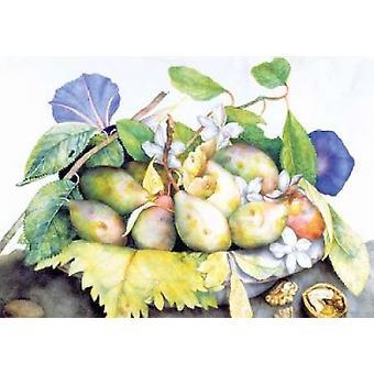 Dish of Plums Jasmine & Walnuts Poster Print by  Giovanna Garzoni