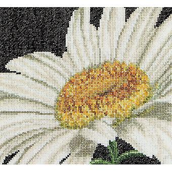 Marguerite On Aida Counted Cross Stitch Kit-6