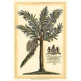 British Colonial Palm II Poster Print by Vision studio (13 x 19)