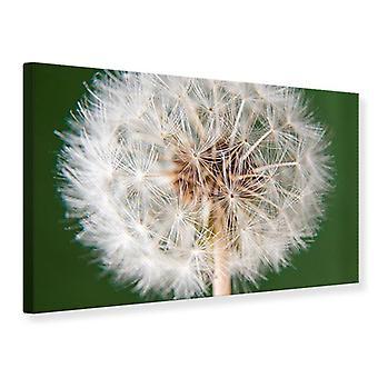 Canvas Print Giant Dandelion