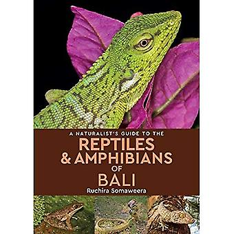 A Naturalist's Guide to the Reptiles & Amphibians of bali (Naturalist's Guides)