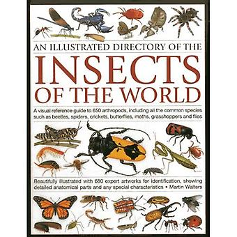 Illustrated Directory of Insects of the World: A Visual Reference Guide to 650 Arthropods, Including All the Common Species Such as Beetles, Spiders, ... Butterflies, Moths, Grasshoppers and Flies