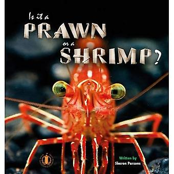 Is it a Prawn or a Shrimp? (The Literacy Tower)