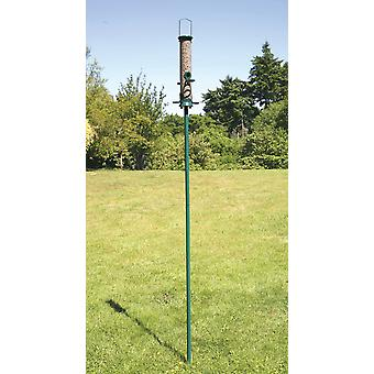 CJ haven Pole grøn