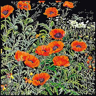 Orange Poppies On Aida Counted Cross Stitch Kit-14.75