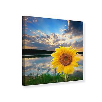 Lærred Print solsikke på søen