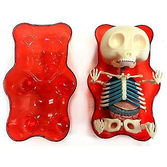 Red Gummi Bear Anatomy Model