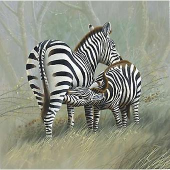 Twee Zebra Poster Print by Jan Weenink