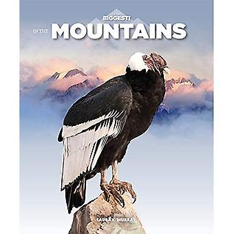 Dans les montagnes (je suis le plus grand)