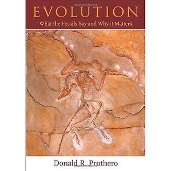 Evolution: Hvad fossiler sige og hvorfor det betyder noget
