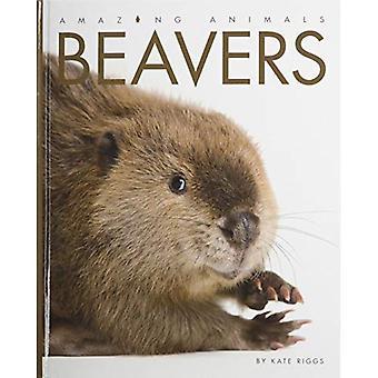Amazing Animals Beavers