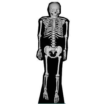 Skelett (Halloween) - Lifesize Karton Ausschnitt / f