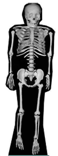 Skelet (Halloween) - Lifesize karton gestanst / Standee