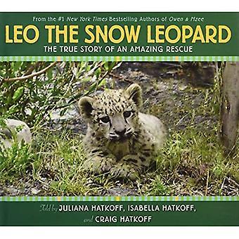 Leone, il leopardo delle nevi