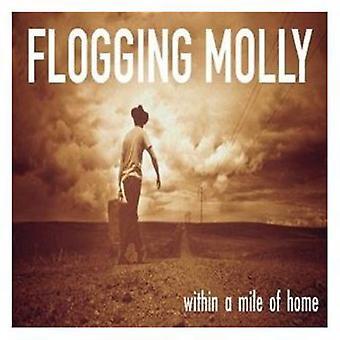 Flogging Molly - inden for en Mile af Home [CD] USA import