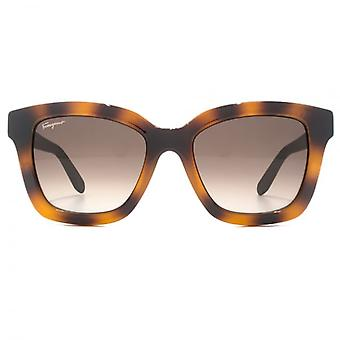 Salvatore Ferragamo Feminine Square Sunglasses In Tortoise