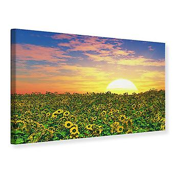 Canvas Print Flowers Panorama At Sunset
