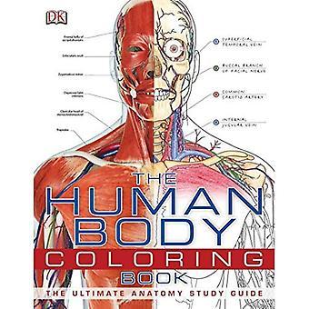 Der menschliche Körper-Malbuch
