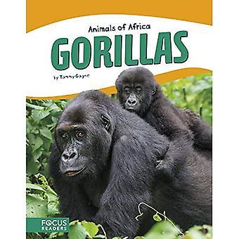 Djur i Afrika: gorillor