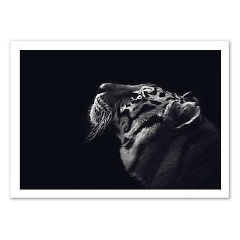Kunst-poster-Tiger zwart en wit-Julia Bénard 50 x 70 cm