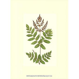 Woodland ormbunkar VII affisch Skriv av EJ Lowe (10 x 13)