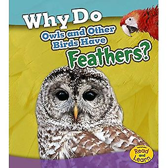 Why Do Owls and Other Birds Have Feathers? (Animal Body Coverings)