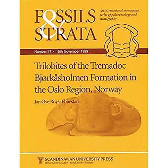 Trilobites de la Formation du Trémadocien Bjorkasholmen dans la région d'Oslo, Norvège