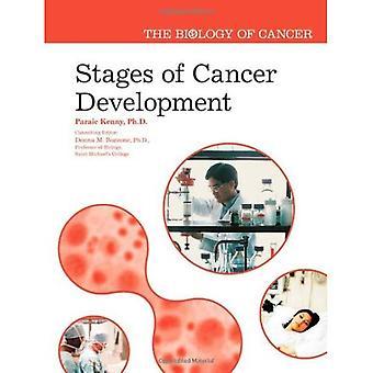 Phasen der Entwicklung von Krebs (Biologie des Krebses)