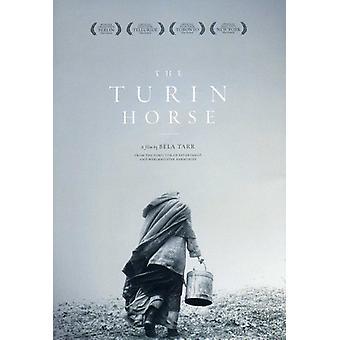 Torino hest [DVD] USA importerer