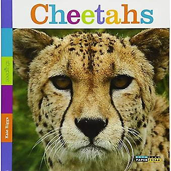 Semis: guépards