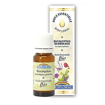 Biofloral Eucalyptus essential oil Globulus (Woman , Cosmetics , Body Care , Treatments)