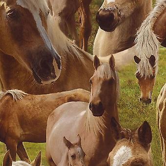 Bruin paard paarden Pony Wallpaper Kids Teens Kinder slaapkamer functie Rasch
