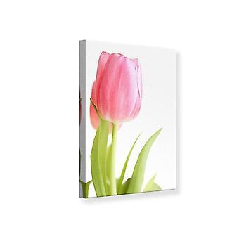 Canvas Print XXL Tulip