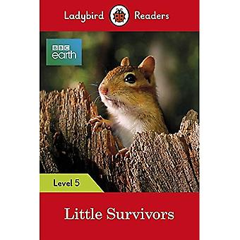Coccinelle lecteurs 5 niveau BBC peu de survivants de la terre