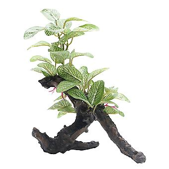 Fluval African Shade Leaf Plant On Root 20cm