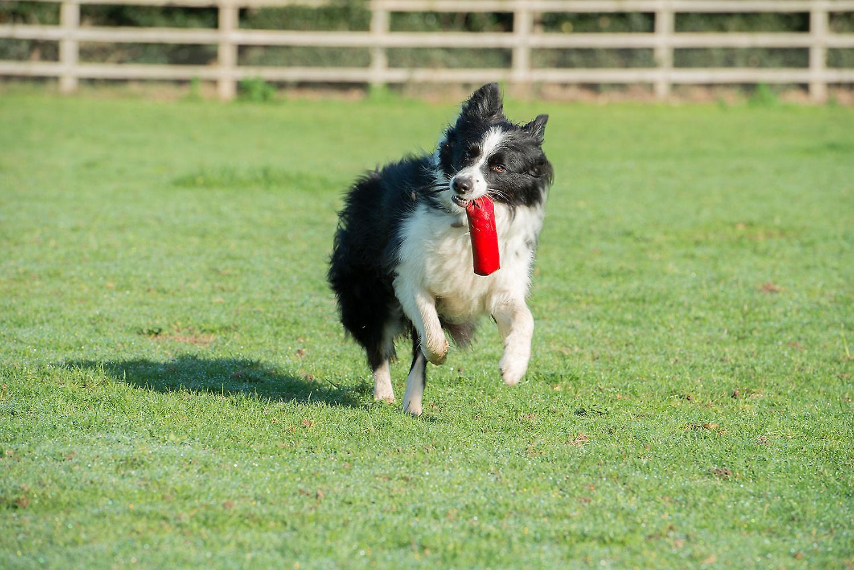Clix Canvas Floating Training Dummy Small, Dog Retrieval Training Dummy