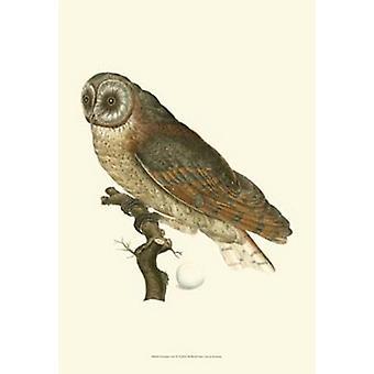 Nozeman Owls IV Poster Print (13 x 19)