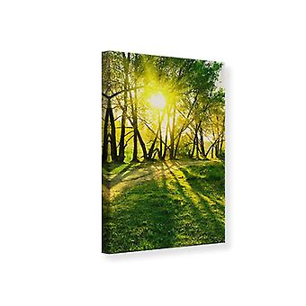 Canvas Print Forest Path In Sunlight