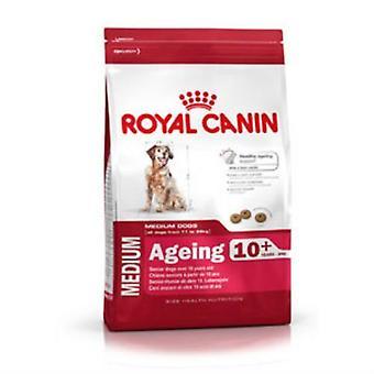 Royal Canin aldring Maxi 8 + komplet hundefoder 15kg