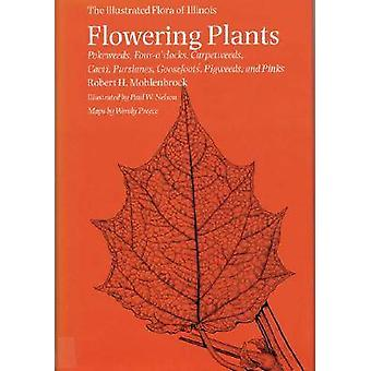 Flowering Plants - Pokeweeds - Four-o'clocks - Carpetweeds - Cacti - P