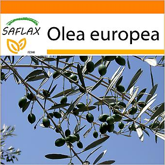 Saflax - Garden in the Bag - 20 seeds - Common Olive - Olivier - Olivo - Olivo - Ölbaum