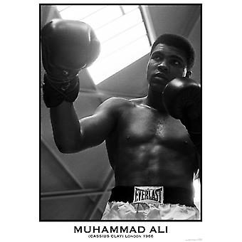 Muhammad Ali Gloves Poster Poster Print