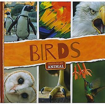 Birds (Parts of an Animal)