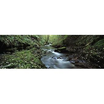 River flowing through a forest River Lyd Lydford Gorge Dartmoor Devon England Poster Print