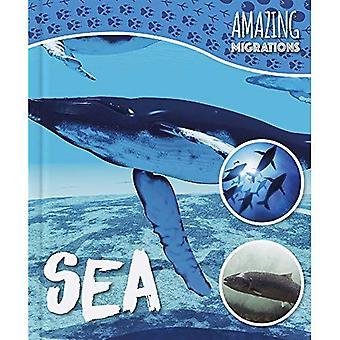 Zee (geweldige migraties)