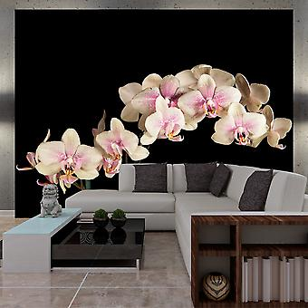 Wallpaper - Blooming orchid