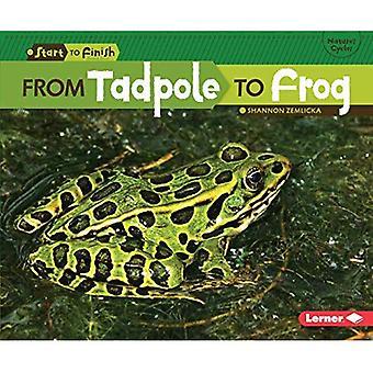 Från Tadpole till groda (Start till Finish, sekund)
