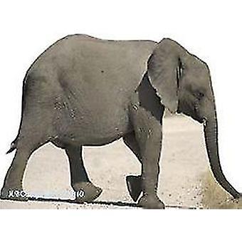 Baby Elephant kartong släppandet