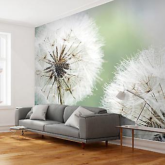 Wallpaper - Two dandelions
